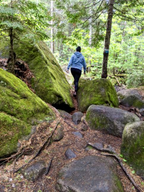 Top 5 des sentiers de randonnée pédestre près de Montréal
