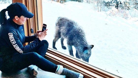 Dormir avec les loups au parc Omega: fantastique!